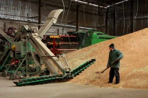 Технология послеуборочной обработки зерна