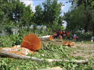 Расчистка участка от кустарников и деревьев
